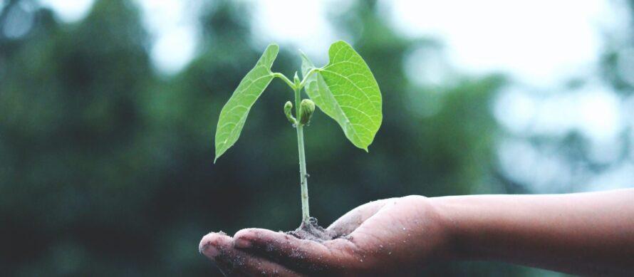idverde sustainability