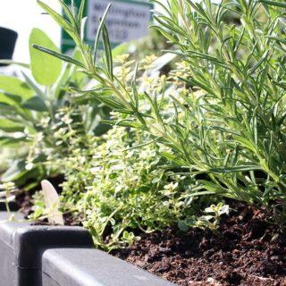 th_herb_planter_2020