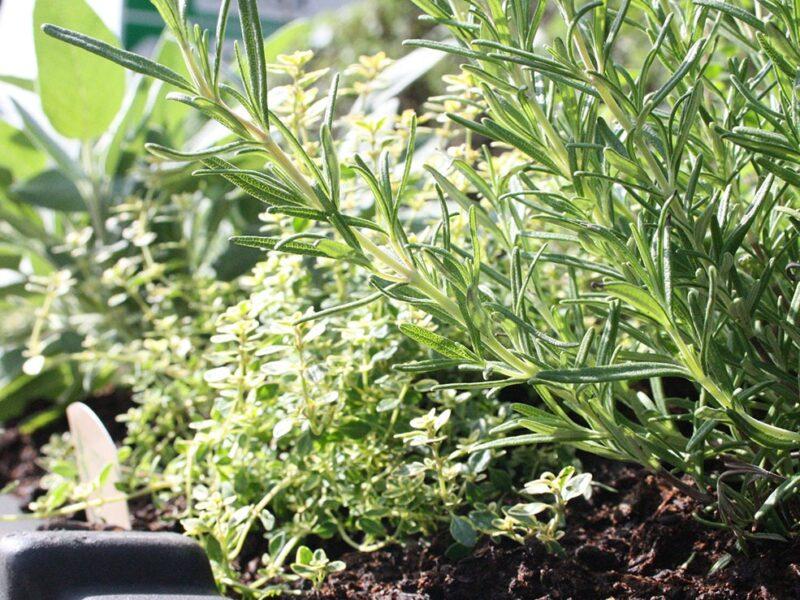 Plantscape herb planters Didsbury