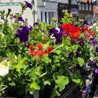 flower barriers
