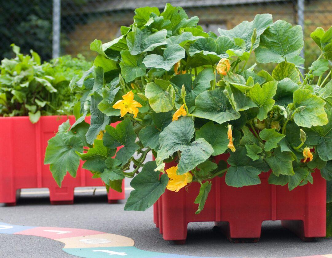 Vegeetable educational planter